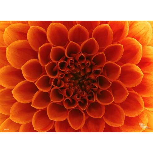 Blüte in Nahaufnahme - Tischset aus Papier 44 x 32 cm