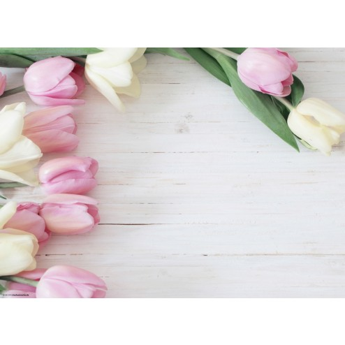 Tulpen weiß & rosa  - Tischset aus Papier 44 x 32 cm