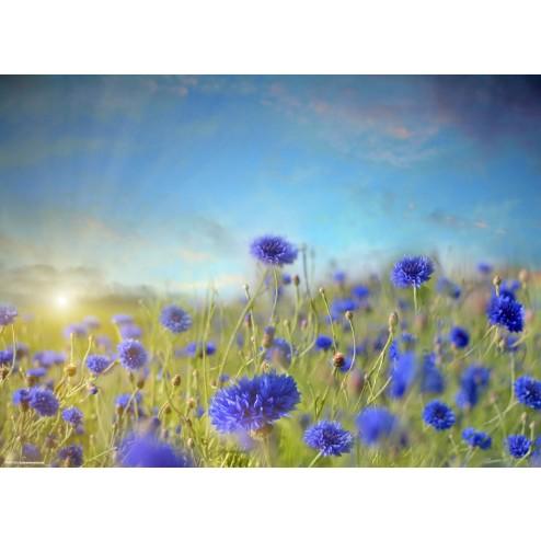 Blaue Kornblumen  - Tischset aus Papier 44 x 32 cm