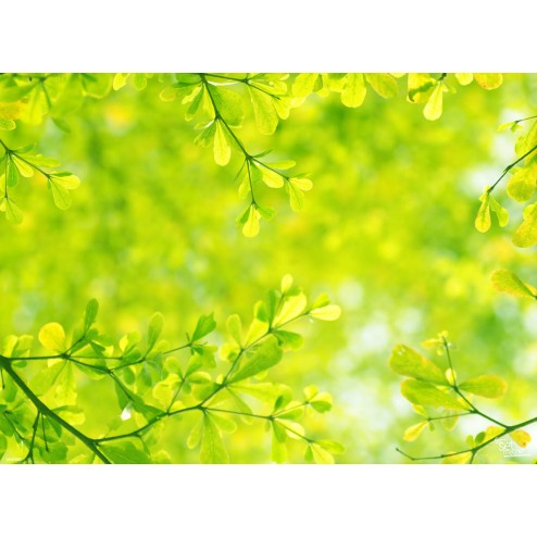 Grüne Zweige - Tischset aus Papier 44 x 32 cm