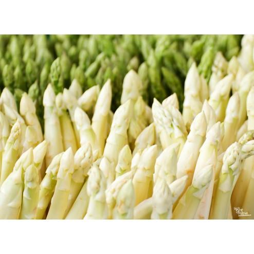 """Tischsets   Platzsets - Saisonal """"Spargel weiß / grün"""" aus Papier - 44 x 32 cm"""