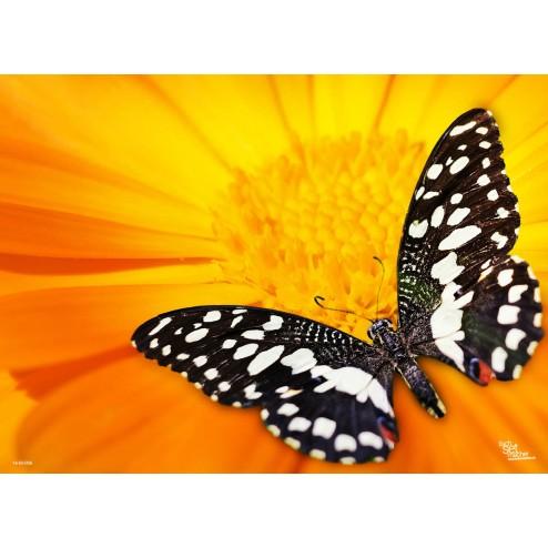 """Tischsets   Platzsets - Schmetterlinge """"schwarz / weißer Schmetterling """" aus Papier - 44 x 32 cm"""