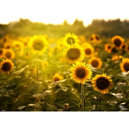 Tischset | Platzset - Sonnenblumenfeld (2) - aus Papier - 44 x 32 cm