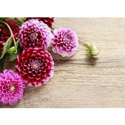 Chrysanthemen - Tischset aus Papier 44 x 32 cm