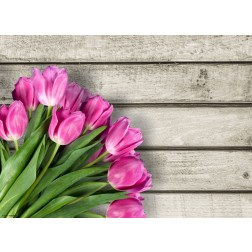 Tulpen pink  - Tischset aus Papier 44 x 32 cm