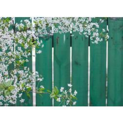 Weiße Blüten vor grünem Zaun - Tischset aus Papier 44 x 32 cm