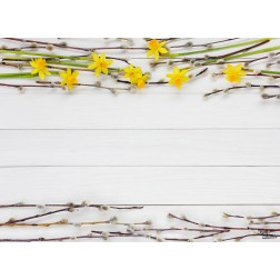 "Tischsets | Platzsets - Frühling ""Frühlingszweige ( 1 )"" aus Papier - 44 x 32 cm"