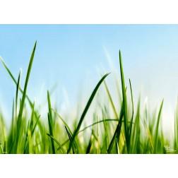 "Tischsets | Platzsets - Frühling ""Grashalme"" aus Papier - 44 x 32 cm"