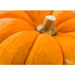 "Tischsets | Platzsets - Halloween ""Kürbis Nahaufnahme"" aus Papier - 44 x 32 cm"