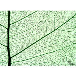 Blattstruktur - Tischset aus Papier 44 x 32 cm