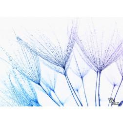 Pusteblume mit Wassertropfen - Tischset aus Papier 44 x 32 cm