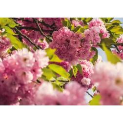 """Schreibtischunterlage - """"Blumen"""" aus Papier - DIN A 2"""