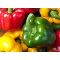 "Tischsets | Platzsets - Food ""bunte Paprika"" aus Papier - 44 x 32 cm"