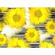 Sonnenblumen Grafik - Tischset aus Papier 44 x 32 cm