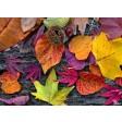 Tischsets | Platzsets - Bunte Blätter mit Kastanie aus Papier - 44 x 32 cm
