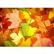Tischsets | Platzsets - Bunte Blättervielfalt aus Papier - 44 x 32 cm