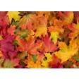 Tischsets | Platzsets - Bunte Blätter aus Papier - 44 x 32 cm