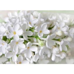 Weiße Blüten - Tischset aus Papier 44 x 32 cm