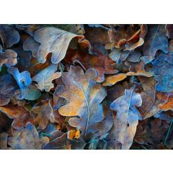 Frostblätter - Tischset aus Papier 44 x 32 cm