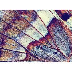"Tischsets | Platzsets - Schmetterlinge ""Schmetterlingsflügel bunt "" aus Papier - 44 x 32 cm"